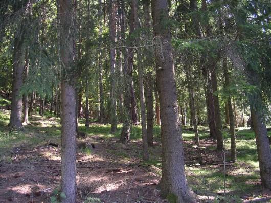 0162-9300-Wald