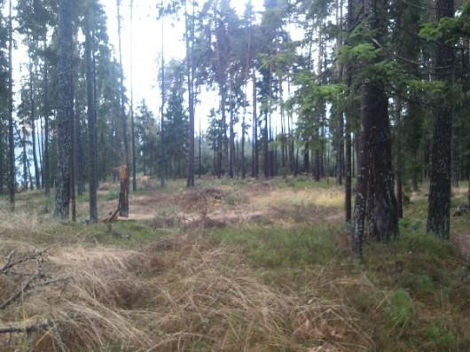 0072_9560 Wald